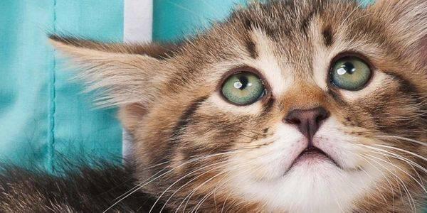 Почему пена изо рта у кошки: что делать, причины