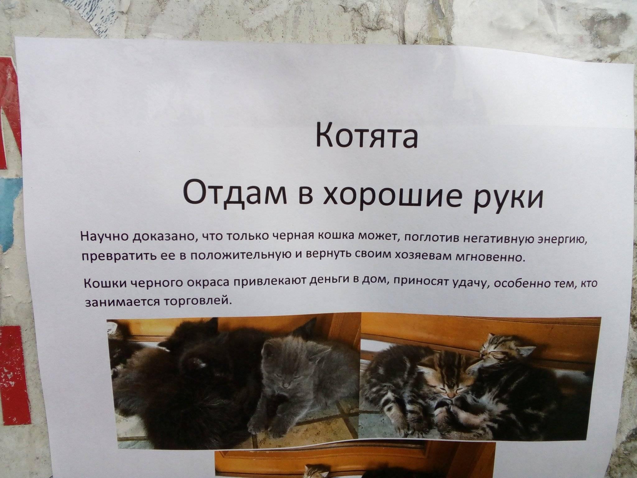 Топ-7 советов для покупки породистого котенка: признаки хорошего заводчика, необходимые документы, содержание