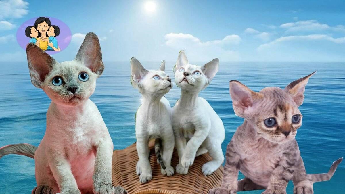 Самые умные породы кошек: топ-10 список с фото самых умных кошек