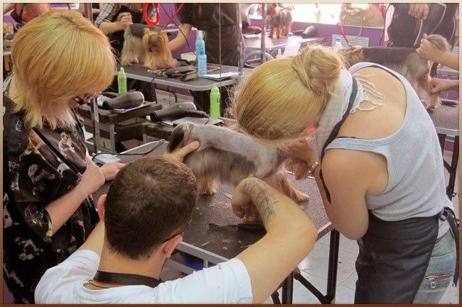 Грумер - кто это? всё о собачьем парихмахере и его функциях