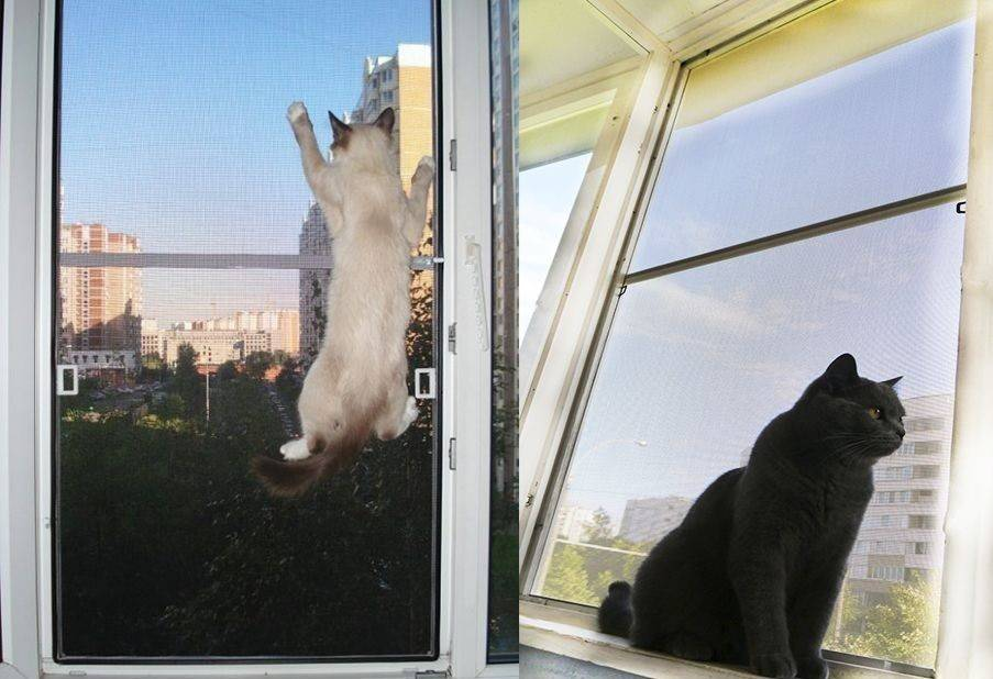 Белая кошка в доме: что расскажут приметы о питомце в снежной шубке