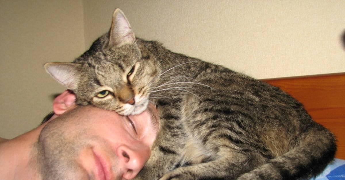 Как показать коту свою привязанность: 11 шагов