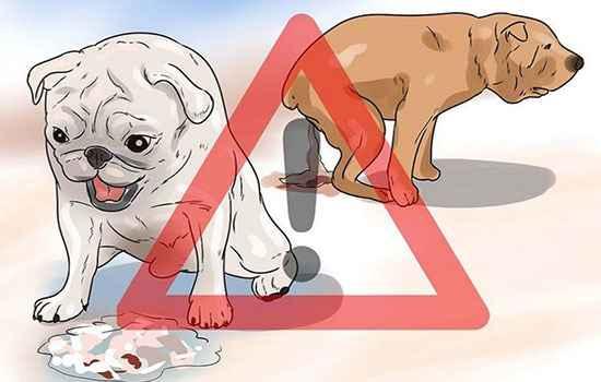 "Цвет кала в зависимости от заболевания собаки | блог ветклиники ""беланта"""