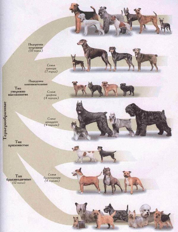 Топ-14 самых древних пород собак
