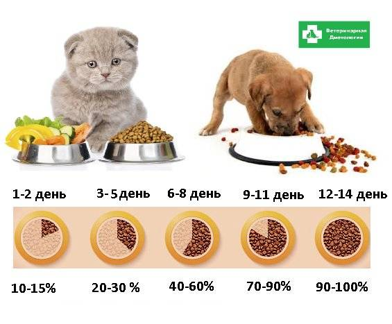 Как переводить собаку на другой корм: на сухой, влажный или специализированный корм