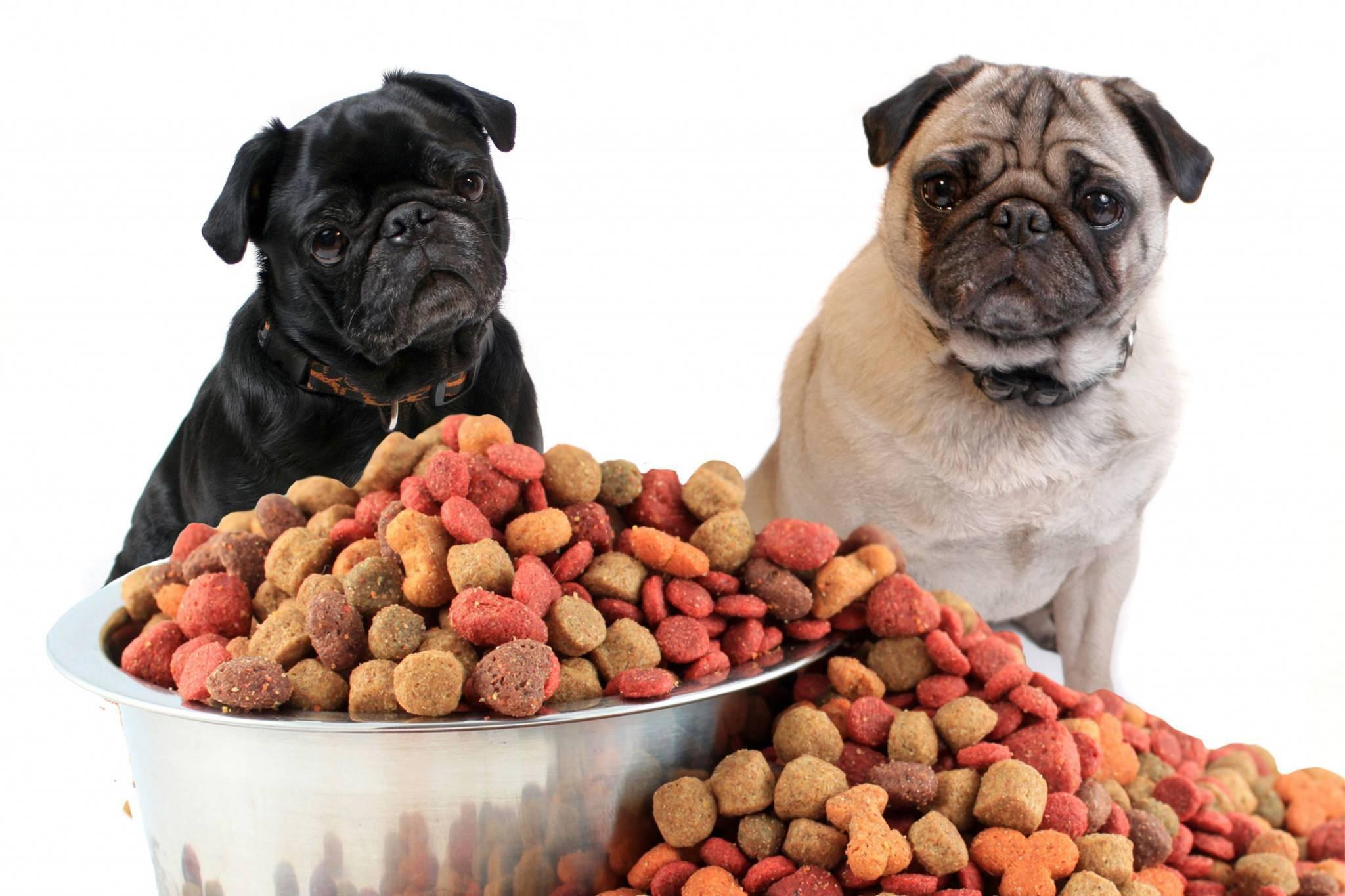 10 лучших сухих кормов для мопса | dog-care - журнал про собак