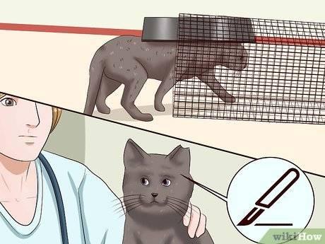 Причины, по которым люди заводят кошку