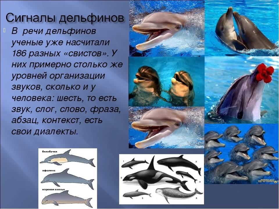 Люди и дельфины: история взаимоотношений (статья + 4 фото) – antiloh.info antiloh.info