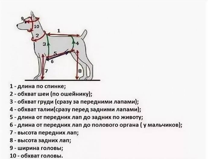 Как определить размер одежды для собаки на алиэкспресс