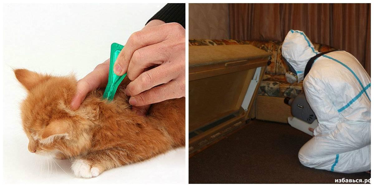 Решили завести котенка? узнайте, что делать в первую очередь | perfect fit™