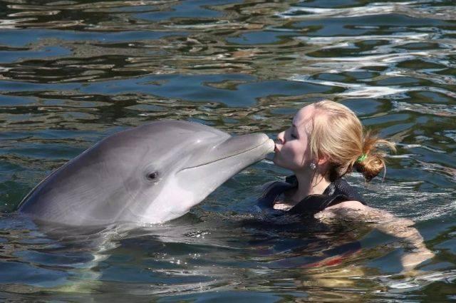 Почему язык дельфинов круче человеческого и как общаются орангутаны – самые умные приматы после людей. жизнь — все новости (вчера, сегодня, сейчас) от 123ru.net