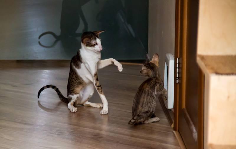 Кот метит в доме: что делать? кот метит в доме: что делать?