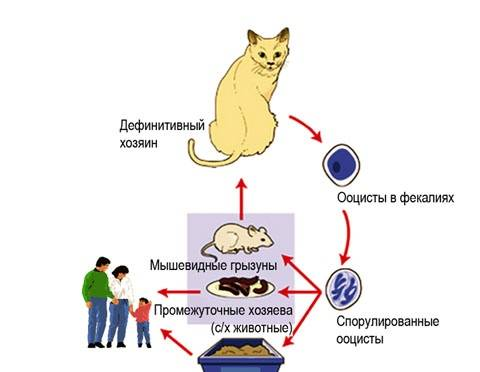 Цитомегаловирусная (цмв) инфекция: симптомы и лечение у женщин. советы врача.