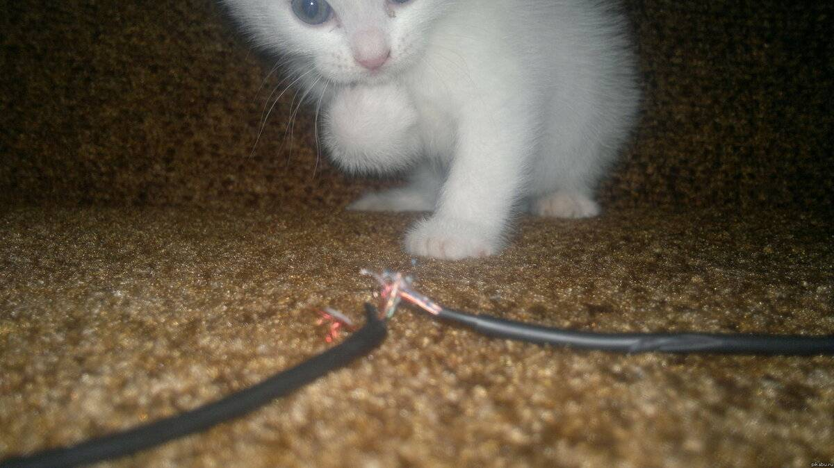 Как кота отучить грызть провода? почему коты, кошки и котята едят провода и зарядки? как правильно защитить провода?