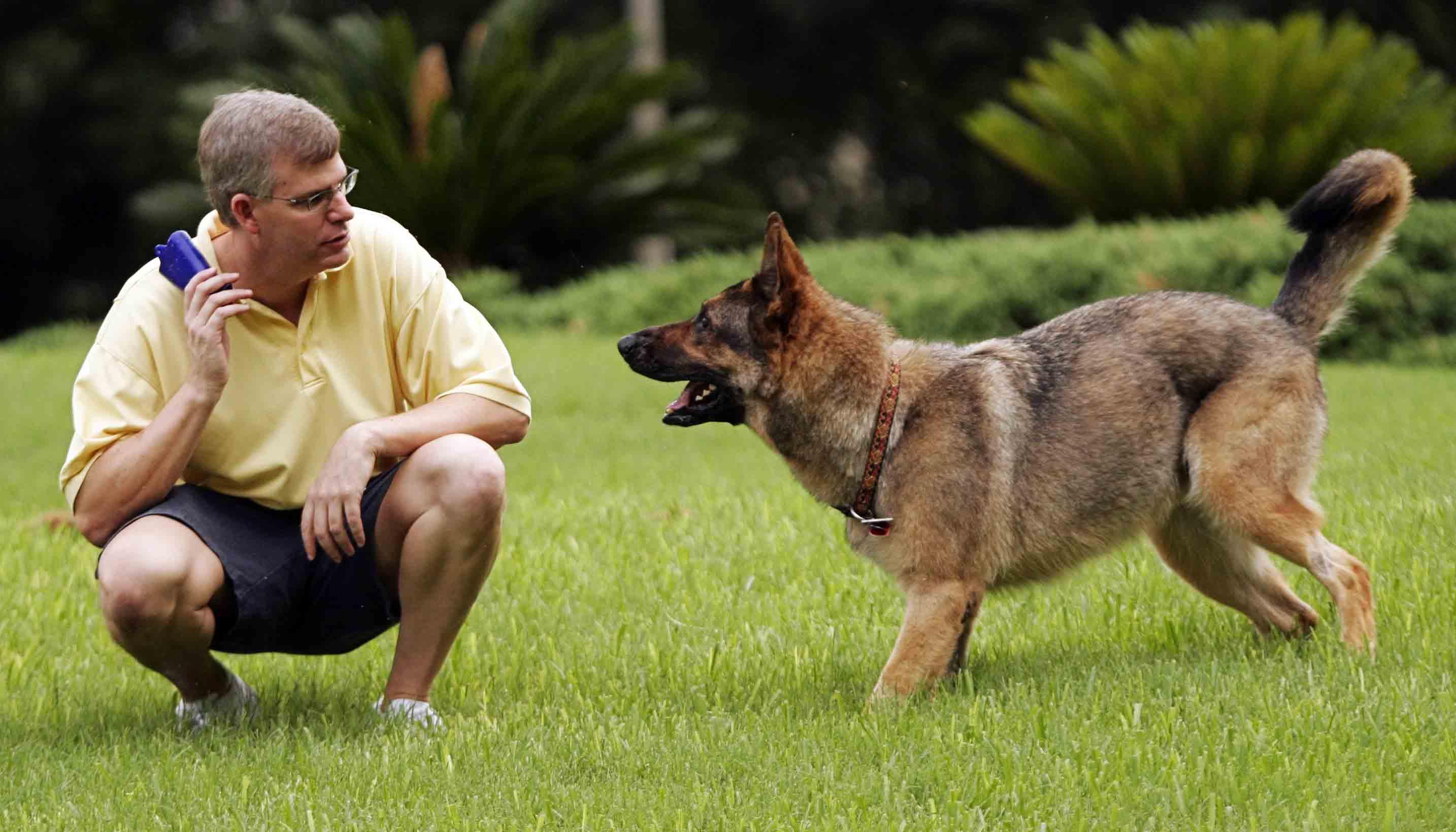 Дрессировка собак в домашних условиях, обучение основным командам