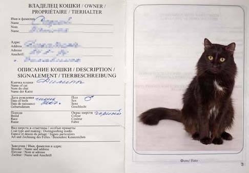 Как сделать паспорт коту. информация для хозяев