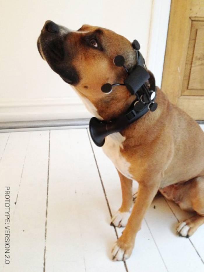 Звуки собаки слушать онлайн • скачать бесплатно • мелодии рингтоны online