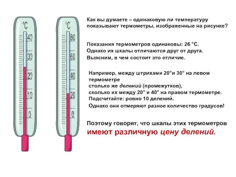 Температура тела кошки в норме