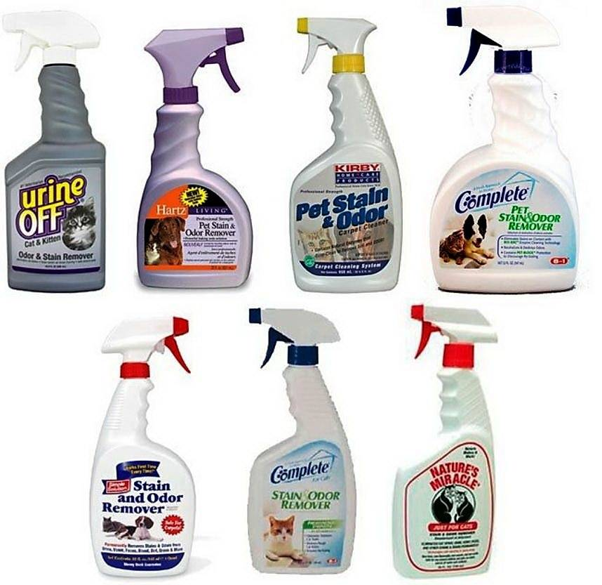 25 средств, как избавиться от застарелого запаха кошачьей мочи в квартире