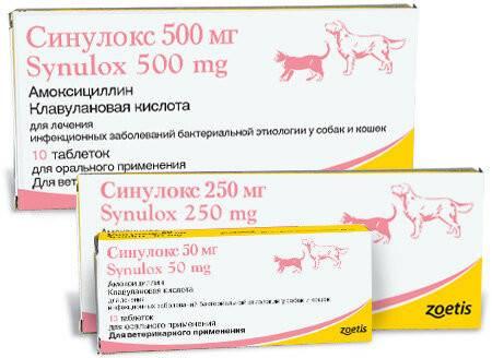 Синулокс для собак: инструкция по применению, отзывы