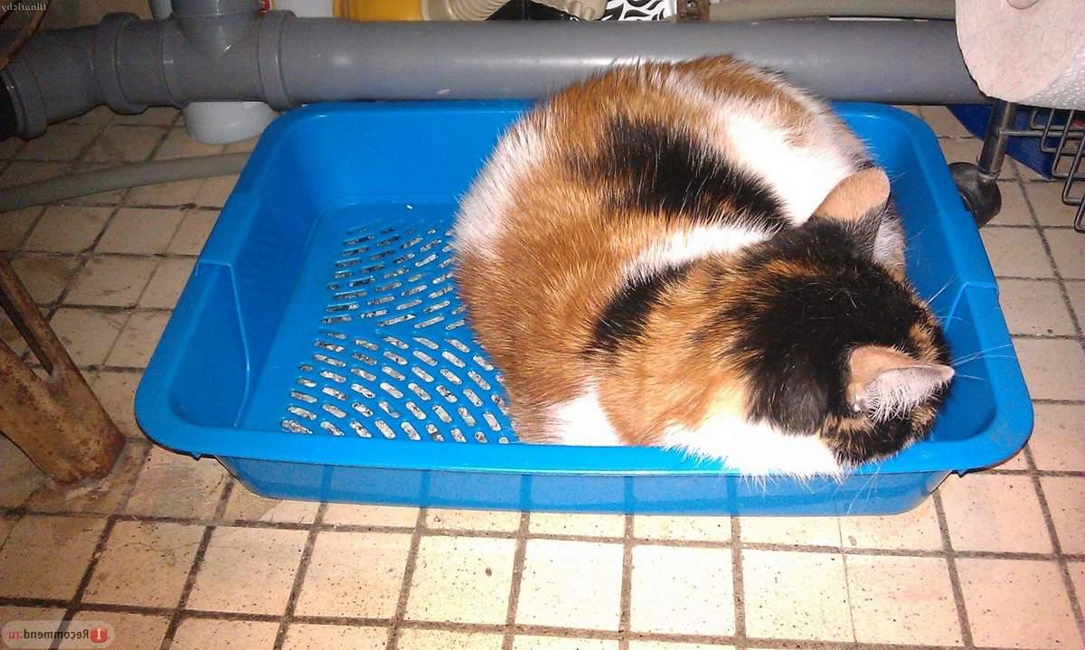 Учимся правильно использовать лоток для кошек с решеткой