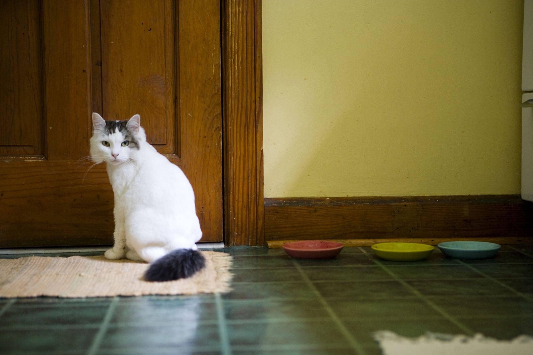 Если кот все метит в квартире: что делать и как его отучить от плохой привычки