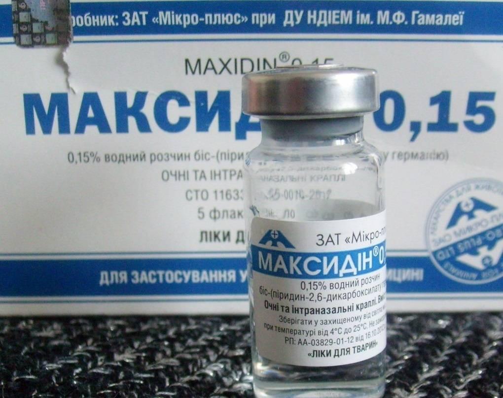 Максидин: инструкция по применению для кошек, отзывы, аналоги препарата