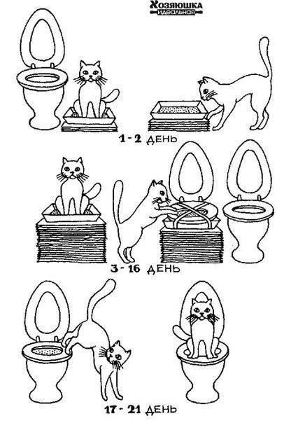 Как быстро приучить котенка к лотку: проверенные способы