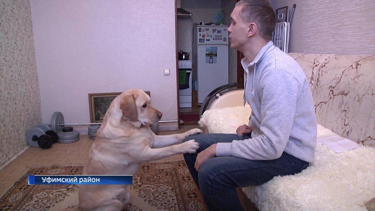 Собаки-поводыри - породы собак-проводников для слепых, подготовка и дрессировка, список центров - dogtricks.ru