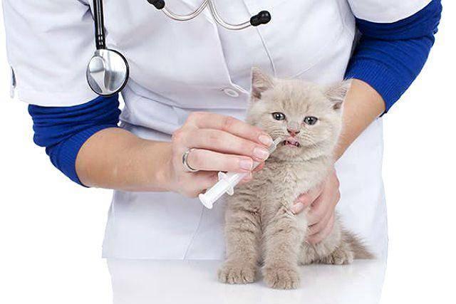 Запор у кошки: лечение в домашних условиях и у ветеринара, первая помощь, распознавание симптомов, профилактика