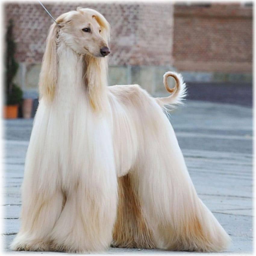Самые милые породы собак в мире — топ-10 с названием, фото и описанием
