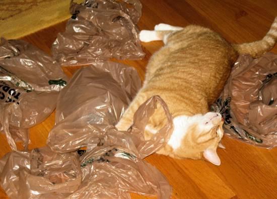 Что делать, если кот съел пакет? инородное тело в желудке у кошки кот что то съел не может выблевать