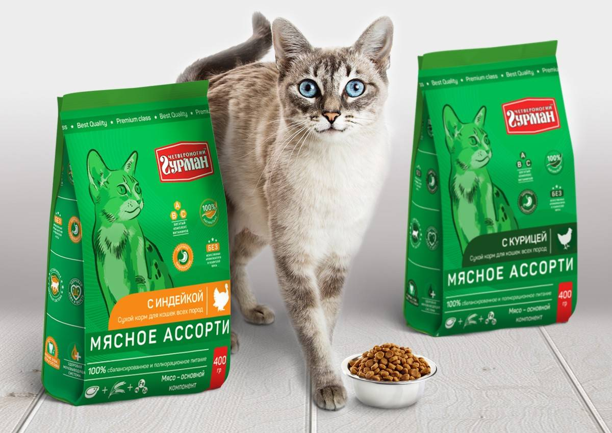 Советы ветеринаров, каким кормом кормить кошку — рейтинг + фото