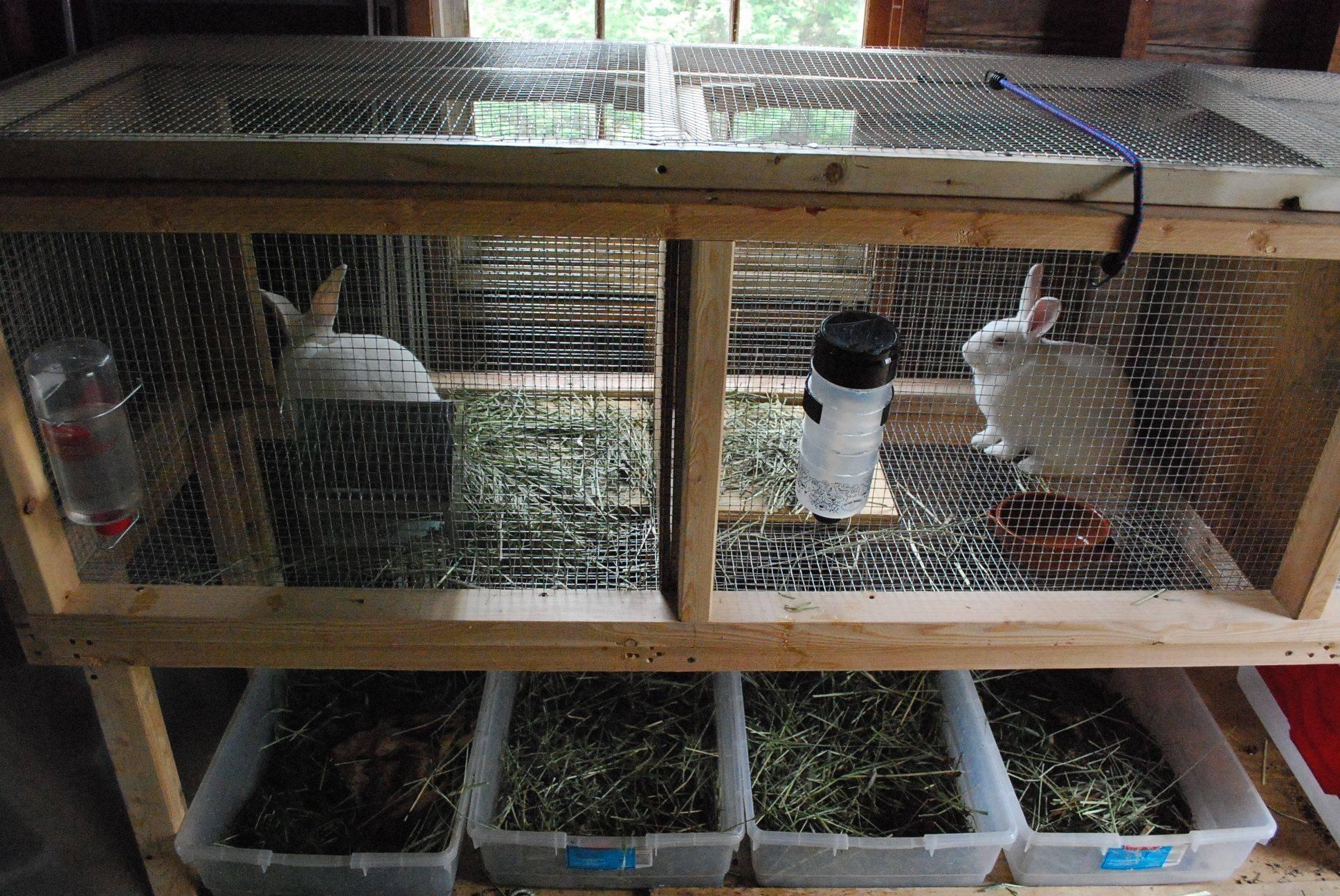 Разведение кроликов для начинающих: условия содержания х в домашних условиях, питание, выбор породы