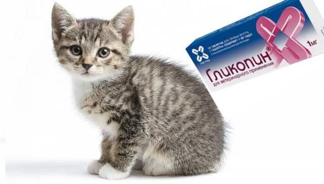 Гликопин для кошек: показания и инструкция по применению, отзывы, цена
