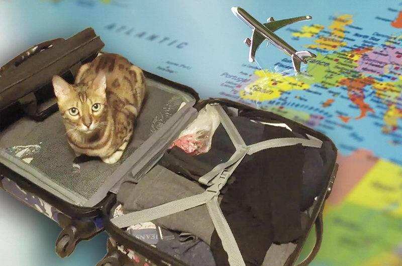 Как оставить домашнее животное одного на время отпуска