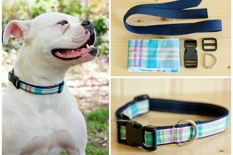 Как правильно одеть шлейку на собаку: пошаговая инструкция, фото
