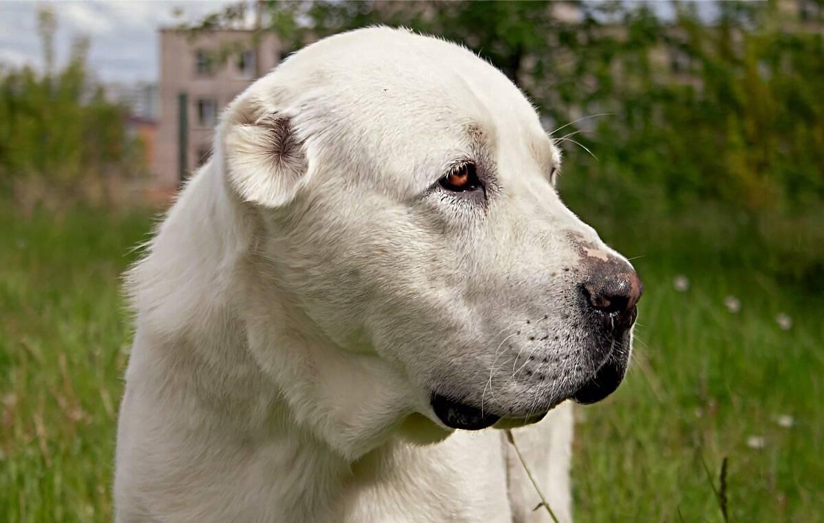 Приемы установления лидерства в отношениях с собакой