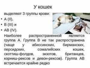 Биохимический анализ крови у кошек
