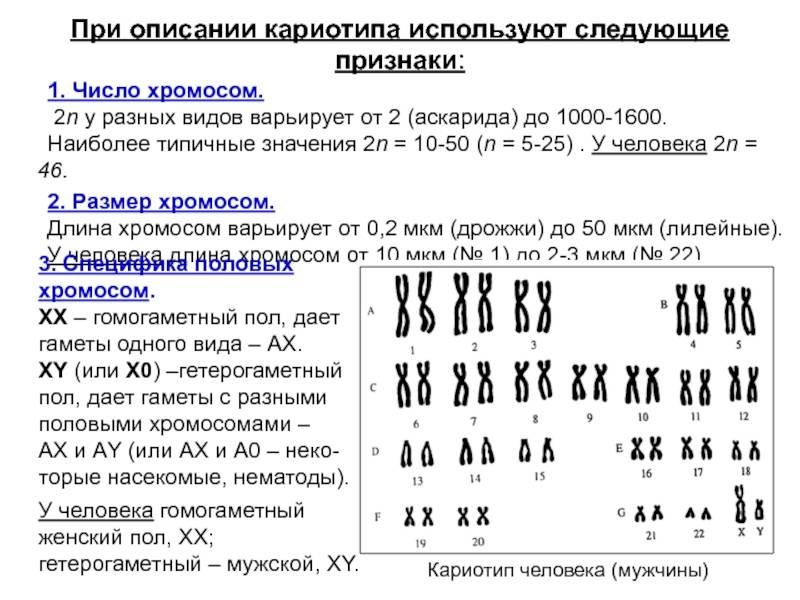 Сколько хромосом у кошек и котов: как выводят новые породы и какие гены отвечают за внешние особенности питомца