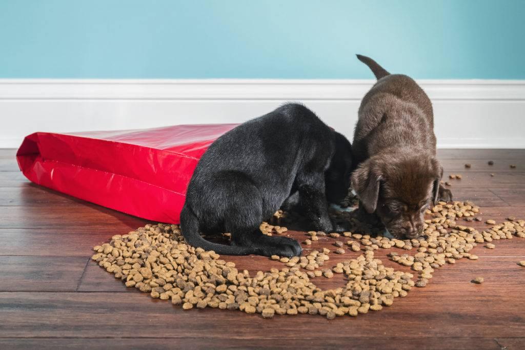 Можно ли давать сухой корм, постоянно кормить им кошек и собак?
