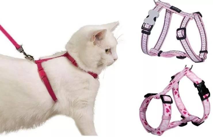 Шлейка для кошки своими руками: общая информация, как сшить поводок по выкройкам