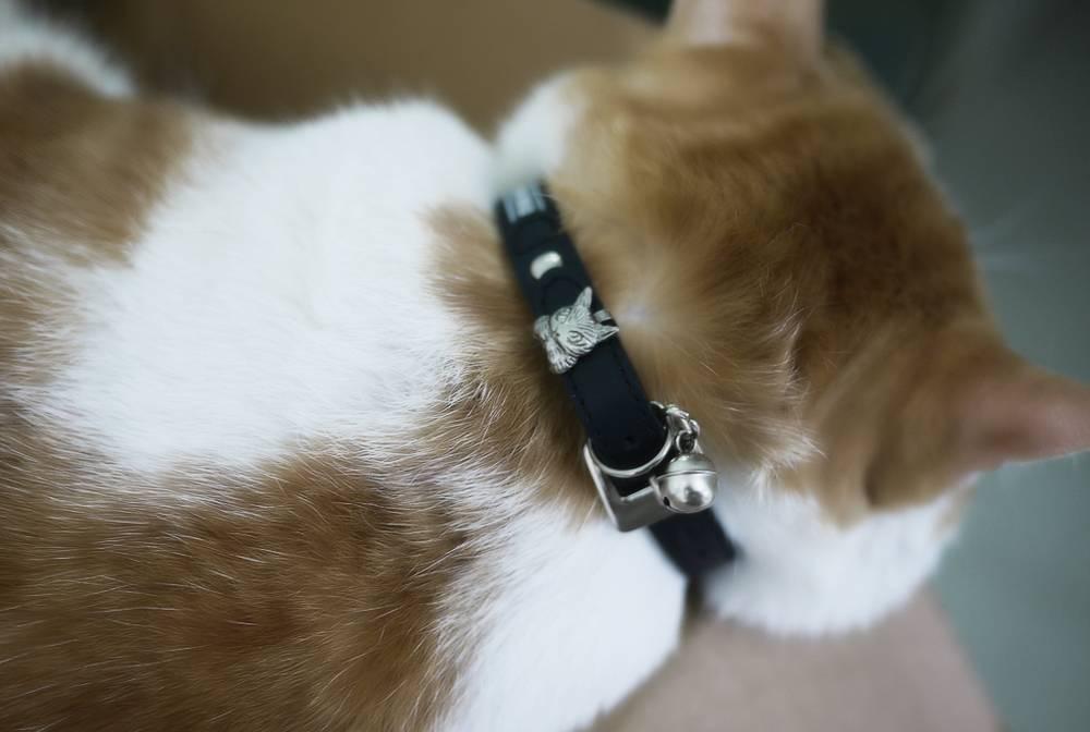 Выбор и применение ошейников от блох и клещей для кошек