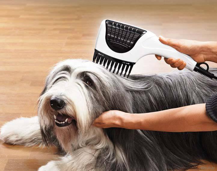Как ухаживать за шерстью у собак, каких видов она бывает и что для этого может пригодиться