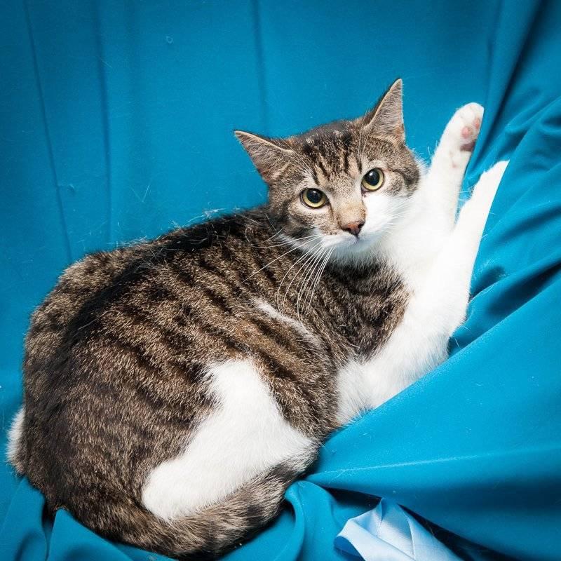 Беспородная кошка: характер, питание, уход | petglobals.com