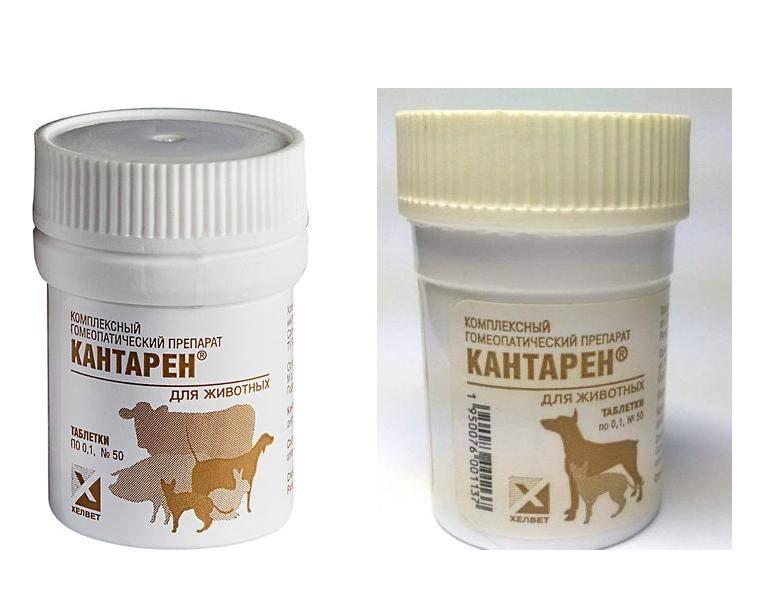 Уколы (таблетки, капли) против гуляния кошки