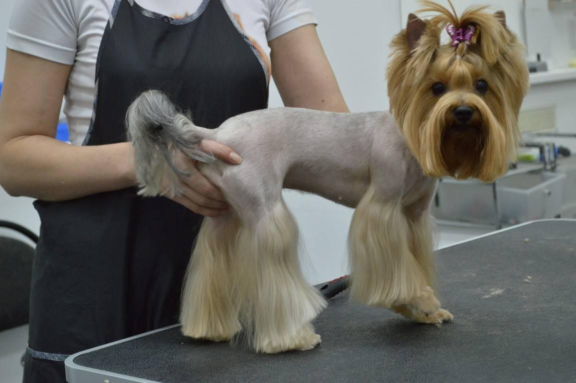 Профессия: грумер. один день с парикмахером для животных