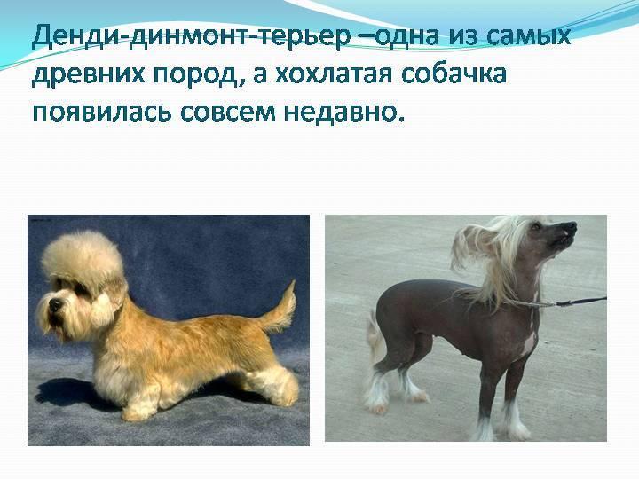 Самая древняя порода собак в мире   на земле, как называется