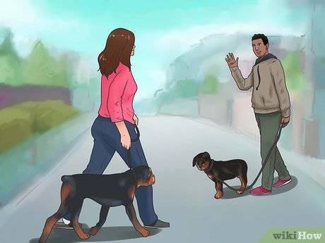 Дрессировка ротвейлера, воспитание щенка ротвейлера в домашних условиях, уход за породой, читать