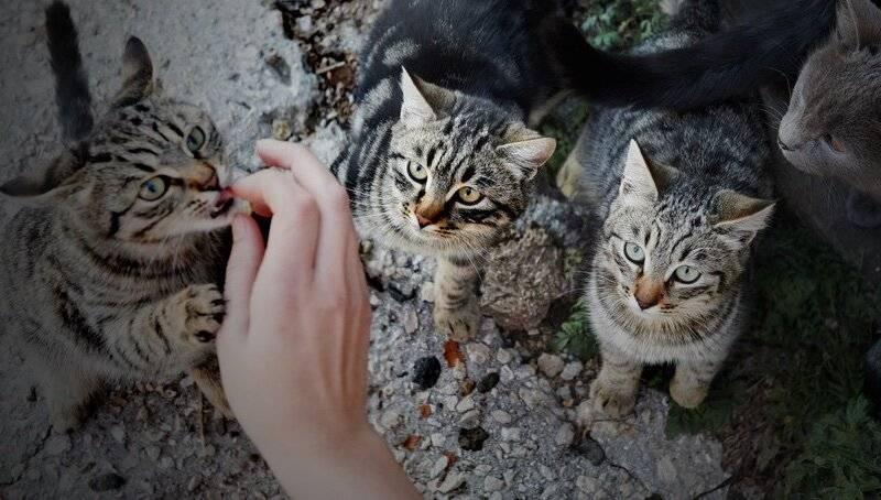 Как приручить дикого котенка, кота или кошку, что делать, если животное тебя боится, как его поймать